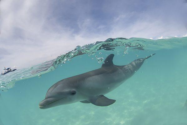 Turks & Caicos baby dolphin