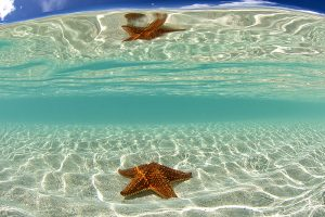 underwater image of a starfish reflection